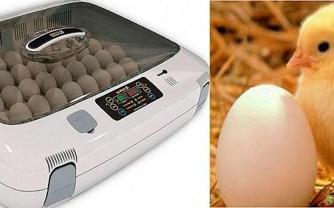 Як вибрати побутовий інкубатор для яєць