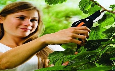 Інструмент для обрізання та формування плодових дерев