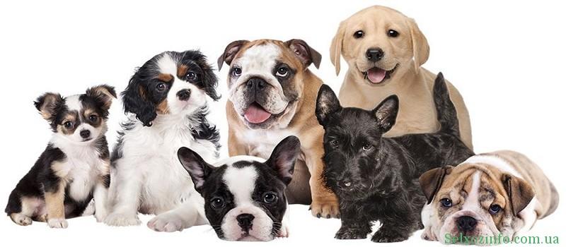 Лучшие породы собак телохранителей