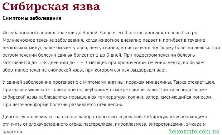 Сибирская язва у поросят, симптомы