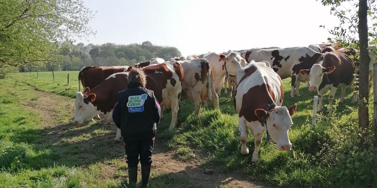 La ferme lait Gaillardises © Lait Gaillardises