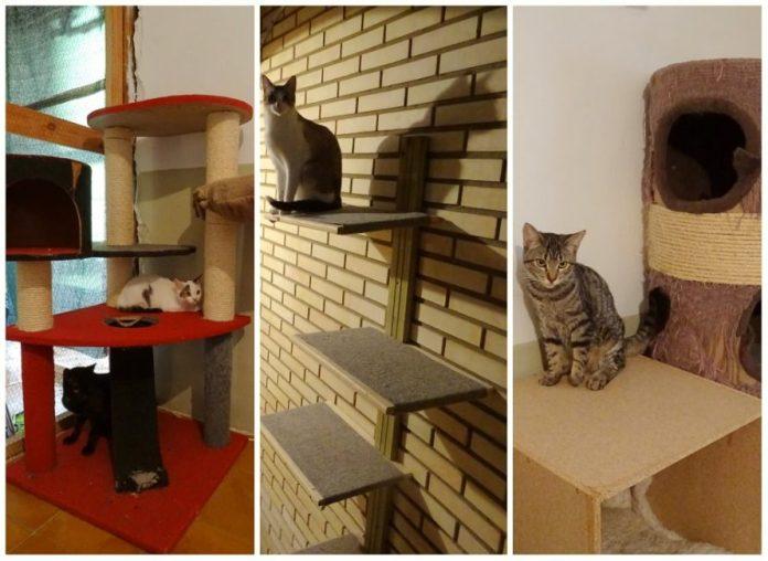 gatos en zonas de juego en voluntarios en refugio muskaria