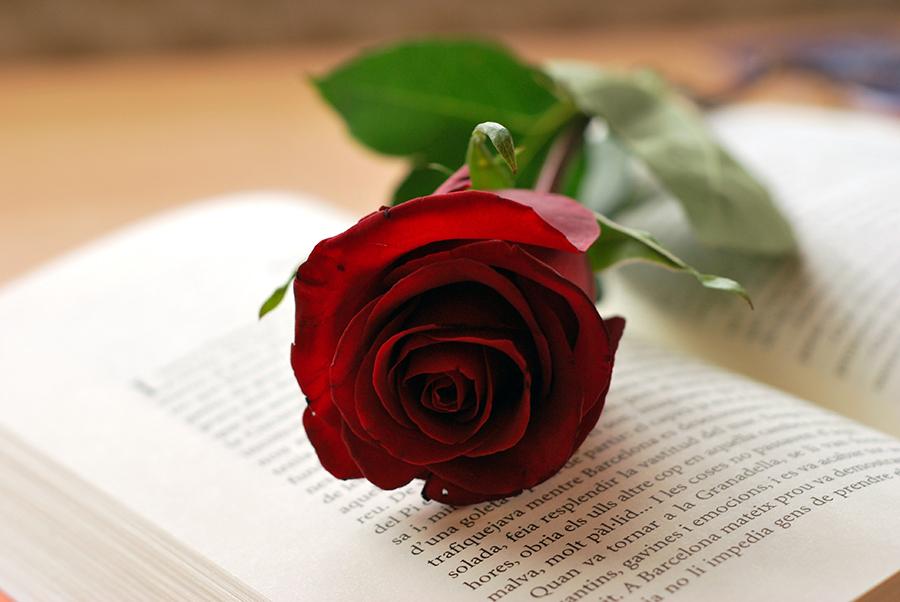 enamorados-libro-rosa
