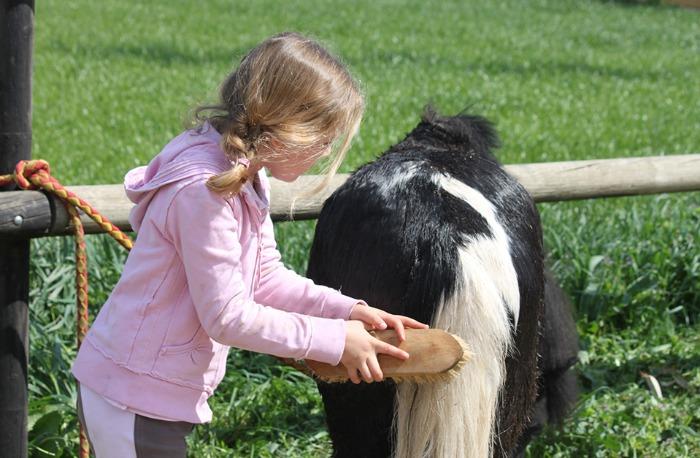 actividad, pony, Utebo