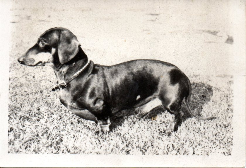 """""""Ricky"""" the family dog at the time"""