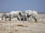 semestafakta-Etosha National Park2