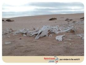 Horse Burial site Swakopmund