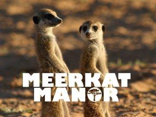 semestafakta-Meerkat Manor