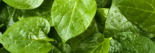 Dieta sem Glúten: Vegetais