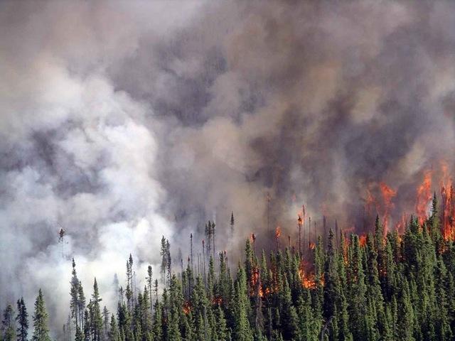 spruce fire