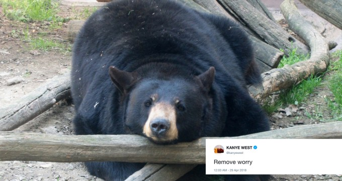 kanye west tweets with photos of bears featured