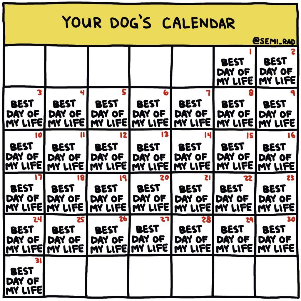 Your Dogs Calendar illustration by Brendan Leonard of Semi-Rad