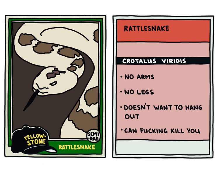 drawing of a yellowstone rattlesnake that can kill you