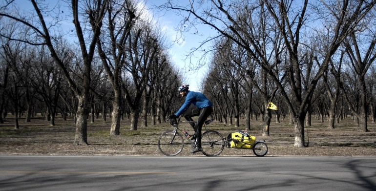 a touring cyclist pedals past pecan trees in new Mexico