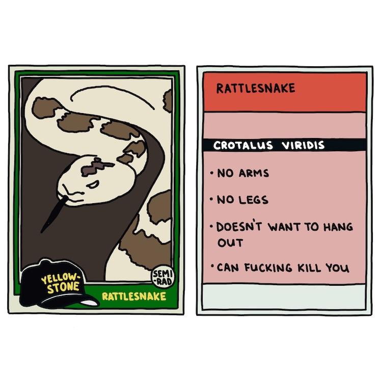 hand-drawn yellowstone trading card: rattlesnake