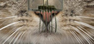 E-whiskers are highly responsive tactile sensor networks made from carbon nanotubes and silver nanoparticles that resemble the whiskers of cats and other mammals. (Source: UC Berkeley)