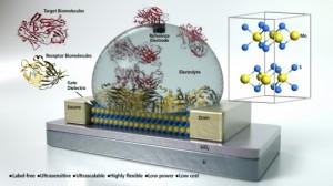 Concept art of a molybdenum disulfide field-effect transistor based biosensor (Source: UCSB)