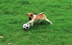 Pretty-Dogs-in-Garden-dogs-13905929-1920-1200