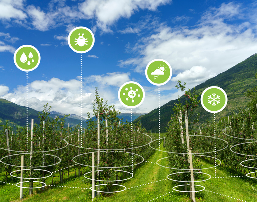 Apple orchard connected to a network of sensors providing insights into various in-canopy conditions.
