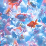 金魚を飼う時初心者はどうすればいいか
