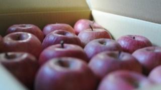 ハーモニーパークでりんご狩り体験