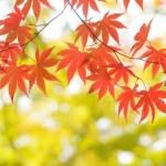 奥只見で紅葉狩り!見頃の時期とアクセス