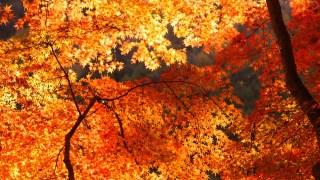 修善寺虹の郷で紅葉狩り!ライトアップの時期とアクセス