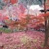 京都の永観堂の紅葉を見に行ってきました