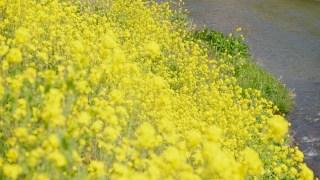 春一番の定義とは?由来や意味は?比較的新しい気象用語?