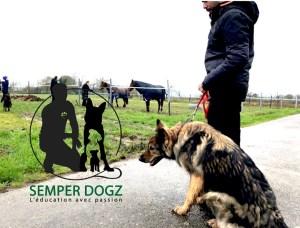 Semper-Dogz---éducateur-canin-nantes-cholet----atldeutsche-schäferhund