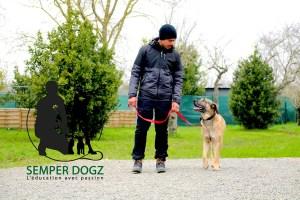 Semper-Dogz---éducateur-canin-nantes-cholet---chien-croisé