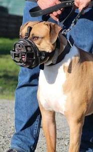 Semper-Dogz---éducateur-canin-nantes-cholet---chien-réactif-congénères-mobile