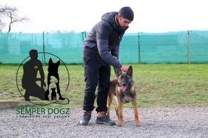 Semper-Dogz---éducateur-canin-nantes-cholet----chiot-berger-allemand