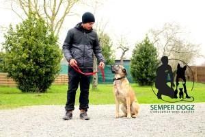 Semper-Dogz---éducateur-canin-nantes-cholet---le-regard-est-plus-fort-que-la-parole