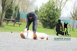 Semper-Dogz---éducateur-canin-nantes-cholet---saint-bernard-caresses