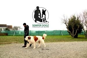 Semper-Dogz---éducateur-canin-nantes-cholet---très-gros-chien