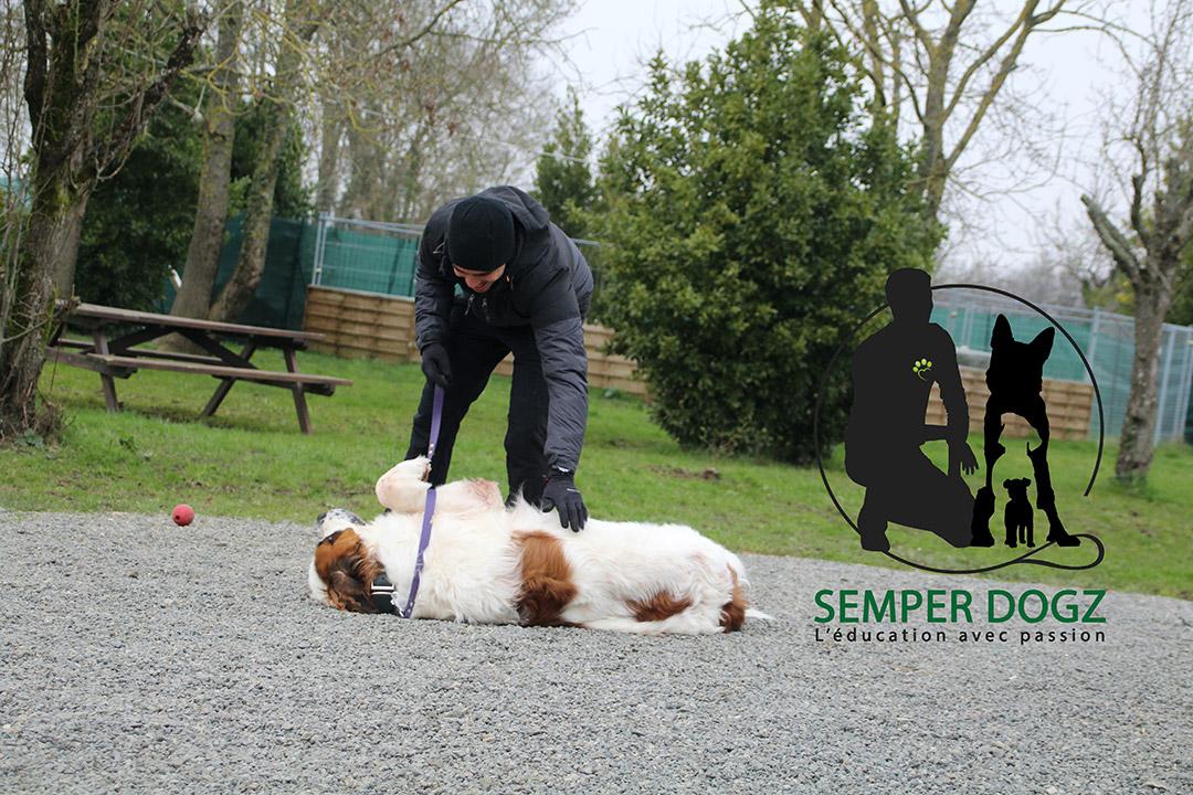 Semper Dogz - éducateur canin nantes cholet - examiner le chien