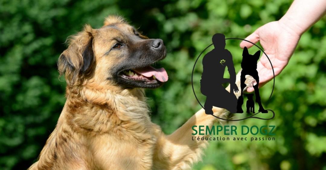 Semper Dogz - éducateur canin nantes cholet - examiner les pattes