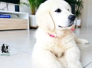 Semper-Dogz---éducateur-canin-nantes-cholet---éducation-du-chiot