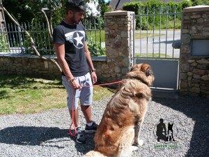 Semper-Dogz-educateur-canin-nantes-cholet---travailler-la-frustration