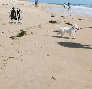 Semper-Dogz-educateur-canin-nantes-cholet-rita-découvre-la-plage
