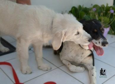 Semper-Dogz-éducateur-canin-nantes-cholet-caractère-de-chien