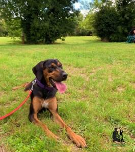 Semper-Dogz-éducateur-canin-nantes-cholet-balade-éducative-Roxane