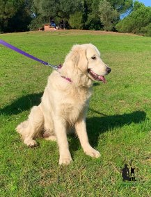 Semper-Dogz-éducateur-canin-nantes-cholet-balade-éducative-Lixy