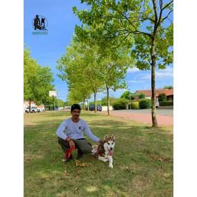 Semper-Dogz-éducateur-canin-nantes-cholet-Husky-Power