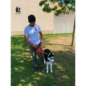 Semper-Dogz-éducateur-canin-nantes-cholet-husky-Raya