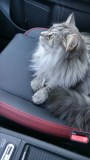 Raz enjoying the car's heated seats