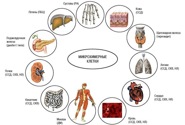 Диета при склеродермии системной • Как вылечить гипертонию