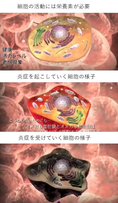 魔法のインナー発見細胞
