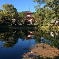 Kala Musim Gugur di Daikakuji Temple